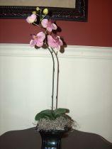 Mini Lavendar Potted Phalaenopsis Orchid