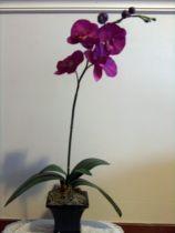 Potted Single Stem Purple Phalaenopsis Orchid Arrangement