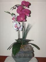 Potted Double Stem Phalaenopsis Orchid Arrangement