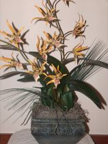 Potted Yellow Spider Orchid Arrangement