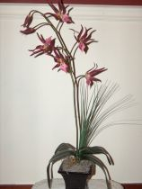 Two-Tone Fuschia Potted Spider Orchid Arrangement