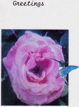 one set of 10 rose cards